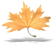 Yellow autumn tree leave with shadow isolated Stock Photo