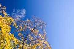 Yellow Autumn Trees Stock Image