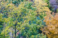 Yellow autumn trees Stock Photos