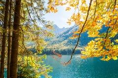 Yellow autumn trees on the coast of lake. Yellow autumn trees on the coast of mountain lake. Selective focus Royalty Free Stock Photos