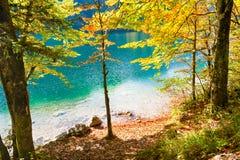 Yellow autumn trees on the coast of mountain lake. Vorderer Langbathsee, Austria Royalty Free Stock Images
