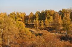 Yellow autumn trees Royalty Free Stock Image