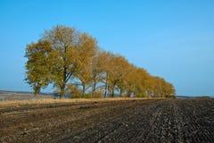 Yellow autumn trees Royalty Free Stock Photo