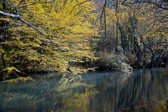 Yellow autumn trees near water Stock Image