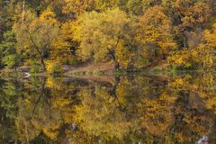Yellow autumn trees reflect on the surface of the lake Royalty Free Stock Image
