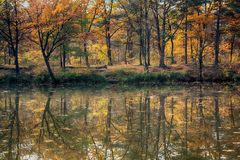 Yellow autumn trees reflect on the surface of the lake. Nature stock photos