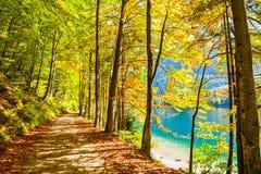 Yellow autumn trees on the shore of lake. Beautiful pathway with yellow autumn trees on the shore of lake Royalty Free Stock Photo