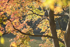Yellow autumn trees. In the sun Royalty Free Stock Photography