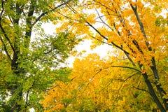 Yellow autumn trees royalty free stock photos