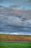 Yellow autumn vineyard beneath cloudy sky Stock Photography