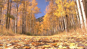 Yellow autumn woodd from the ground stock video footage