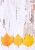 Yellow autumnal leaves with copy space for text on wooden background Royalty Free Stock Photos