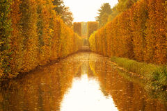 Yellow autumnal park Royalty Free Stock Photos