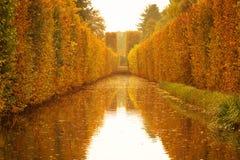 Yellow autumnal park royalty free stock photos