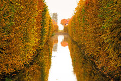 Yellow autumnal park Royalty Free Stock Images