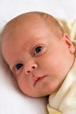 Yellow baby Royalty Free Stock Image