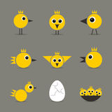 Yellow baby bird Royalty Free Stock Photo
