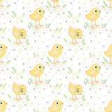 Yellow baby chickens vector seamless pattern Stock Image