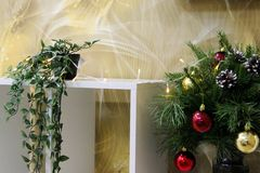 on a yellow background of abstract, a white shelf with a green flower in a pot and coniferous green branches of the Christmas tree stock photo