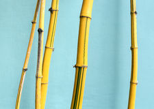 Yellow background bamboo Royalty Free Stock Image