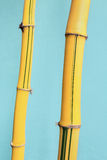 Yellow background bamboo Stock Photography