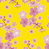Yellow background cherry blossom Royalty Free Stock Photography