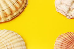 Yellow background with sea shells Stock Photo
