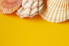 Yellow background with sea shells Royalty Free Stock Photos