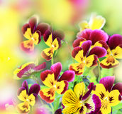 Yellow background with texture of flowers Stock Photo