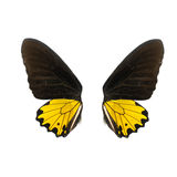 Yellow and balck butterfly wing stock photography