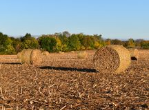 Bales of corn stalks in a farm field on a sunny autumn day Royalty Free Stock Photos