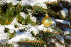 Yellow ball on the Christmas tree Stock Photo