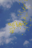 Yellow balloons Royalty Free Stock Photography