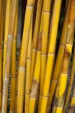 Yellow Bamboo Royalty Free Stock Photos