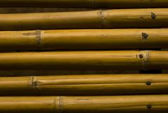 Yellow bamboo Stock Photography