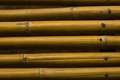 Yellow bamboo Stock Photography