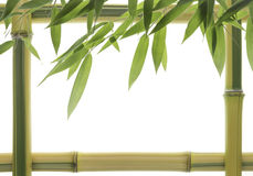 Yellow Bamboo Frame Stock Photo