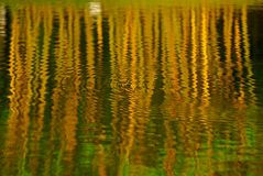Yellow Bamboo Reflection In The Pond Royalty Free Stock Image