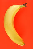 A yellow banana. Stock Photography
