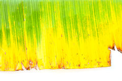 Yellow Banana leaf for background Stock Photography
