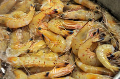Yellow Banana Prawns Stock Image