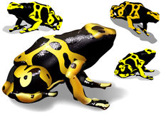 Yellow Banded Dart Poison Frog Stock Images
