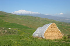 Yellow Barn, Green Pasture And White Volcano Etna Stock Image