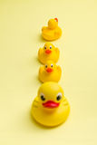 Yellow bath ducks Stock Images