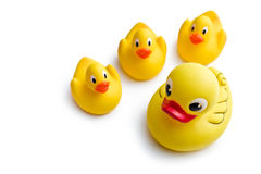 Yellow bath ducks royalty free stock photos