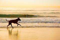 Free Yellow Beach Sunrise Stock Image - 36152651