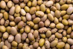 Yellow beans Stock Image