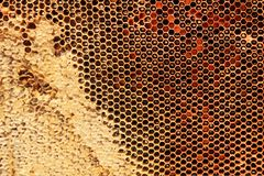 Yellow beautiful honeycomb with honey, background Stock Images