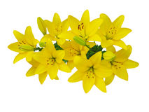 Yellow beautiful lily bouquet on a white background Royalty Free Stock Image