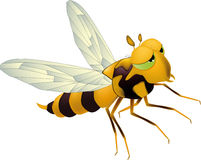 Yellow bee. Wasp stinger bug insect Stock Photography